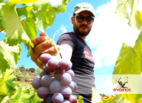 Commandaria: Getting in touch with the country's original viniculture | Wine Cyprus | Scoop.it
