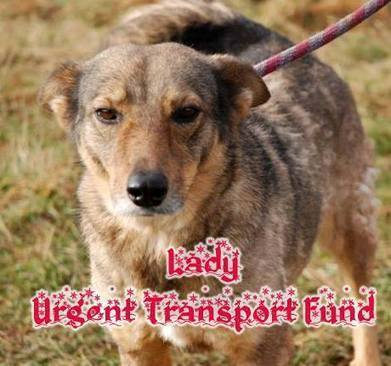 Timeline Photos - K9 Rescue Bulgaria | Facebook | Dog Love | Scoop.it