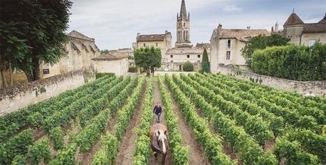 Les cépages de Saint-Émilion | My wine, heritage and communication press review | Scoop.it