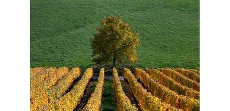 La viticulture peut s'adapter au changement climatique - L'Obs | Univers du vin | Scoop.it