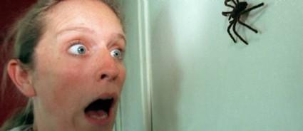 Sujet d'actualité : Comment lutter contre les araignées dans votre maison ? | N°1 de la vente d'alarme sur internet | Scoop.it