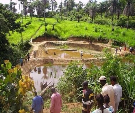 Lagos Trains 89 In Fish Farming   African Life, Lagos Made.   Aquaculture Directory   Scoop.it