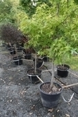 Living Green: Autumn tree planting has its perks - Reading Eagle   Assessment 2 Sustainable living   Scoop.it