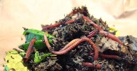 Comment nourrir les vers dans un lombricomposteur? | Communiquez-nous et diffusez | Nouveau portail internet | Scoop.it