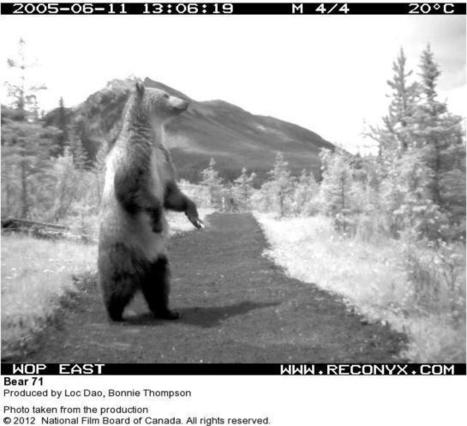 Making of the Interactive Documentary BEAR 71 | Interactive webdoc Innovation | Scoop.it