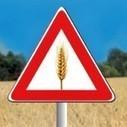 Celiachia. Una guida per l'alimentazione senza glutine. Nelle Usl dell'Emilia Romagna | senza glutine | Scoop.it