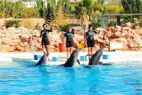 Great news from WDC: dolphinariums banned in India | Planeta Tierra | Scoop.it