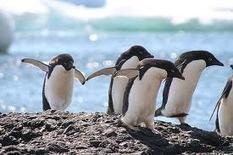 Details of Penguin 2.0 | Social Media Today | Social Media Inside | Scoop.it