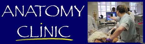 Pelvic Anatomy | Medic e-learning case 2 (Contraception) | Scoop.it