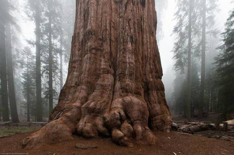 This gentlest of giants, is at least 2,000 years old. Respect! | Biodiversity protection | Scoop.it