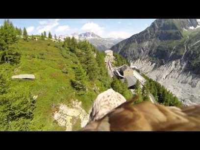 Une GoPro sur un aigle - le blog vincentdidier par : didier | GO PRO | Scoop.it
