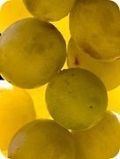Trentino Wine Blog » I Moscato dell'Arco Alpino | trentinowine | Scoop.it