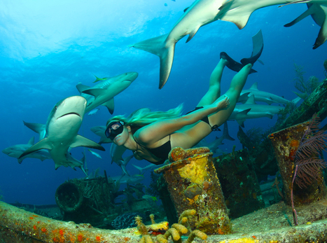 Freediver Liz Parkinson Loves Swimming with Sharks | Apnée | Scoop.it