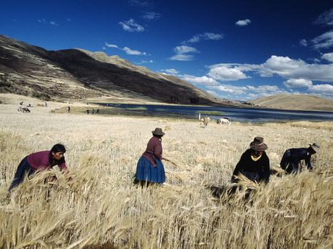 Agriculture : 75% du patrimoine génétique alimentaire a disparu | ActuWiki | Culture | Scoop.it