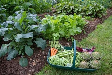 Watering Guidlines for Germinating Seeds | Gardening | Scoop.it