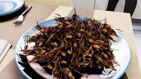 Climate-minded scientists propose Americans start eating 'food insects' | Entomophagy: Edible Insects and the Future of Food | Scoop.it