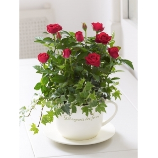 If You Love a Woman Know How to Buy Flowers for Her | The Flower Box | Scoop.it