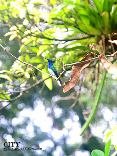 Birdwatch in a Tropical Rainforest at Asa Wright Nature Centre Trinidad - City Style and Living Magazine: Calgary's Premiere Lifestyle MagazineCity Style and Living Magazine: Calgary's Premiere Lif... | Caribbean Things To Do | Scoop.it