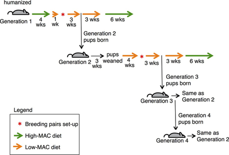 Diet-induced extinctions in the gut microbiota compound over generations : Nature : Nature Publishing Group | Statistical omics and more | Scoop.it