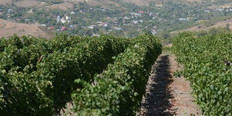 Le vin roumain à la conquête de l'Europe | Articles Vins | Scoop.it