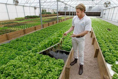 Houston natives' aquaponics farm is growing | Aquaponics in Action | Scoop.it