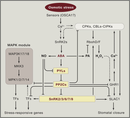 Abiotic Stress Signaling and Responses in Plants | CropScJV | Scoop.it