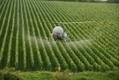 Alerte aux pesticides dans le vin... même bio - France Info   economie   Scoop.it