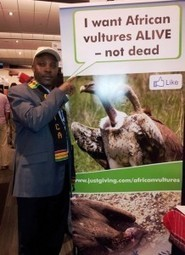 A campaign to save African Vultures in the wake of new poisoning incidents | BirdLife Community | Raptors | Scoop.it