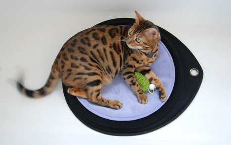 Sleepypod® Crater Dot | Ask The Cat Doctor | Scoop.it