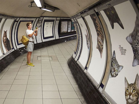 All Adverts In London's Underground Station Have Been Replaced With Cat Pictures | Convincingly Contrarian Crumbs | Scoop.it