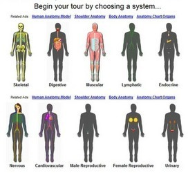 InnerBody - Human Anatomy and Physiology resources | teaching science (pr) | Scoop.it