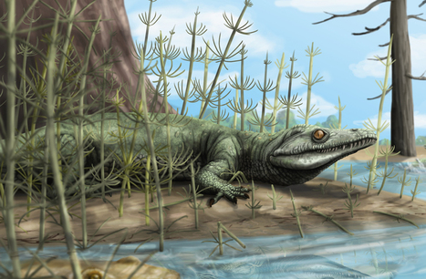 Palaeontologists discover 250 million year old new species of reptile in Brazil | Earth & Space | Scoop.it