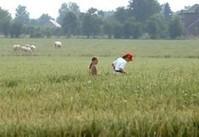La diminution des terres agricoles belges en question les trois prochaines semaines - Yahoo! Skynet | Souveraineté Alimentaire | Scoop.it