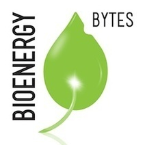 BioEnergy Bytes | Domestic Fuel | forests as a substitute to fossil fuel | Scoop.it