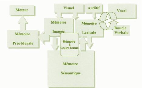 Mémoires et apprentissages | neurosciences | Scoop.it