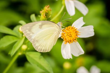 How To Increase Biodiversity In Your Garden - The English Garden   Gardening   Scoop.it