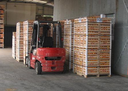 La aduana de Lleida ha exportado 75,2 millones de fruta en 2013, un 43% más | Sector hortofrutícola | Scoop.it