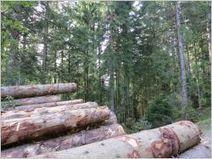 Traitement phytosanitaire : la filière bois tire la sonnette d'alarme   Toxique, soyons vigilant !   Scoop.it