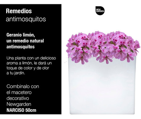 Maceta Narciso50 y un remedio antimosquitos | Newgarden Spain | Scoop.it