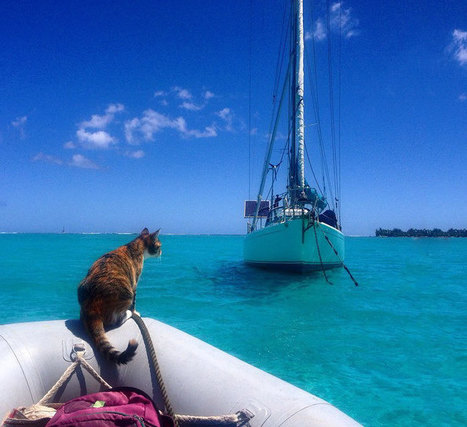 Woman Quits Her Job And Sails Around The World With Her Rescue Cat | CLOVER ENTERPRISES ''THE ENTERTAINMENT OF CHOICE'' | Scoop.it