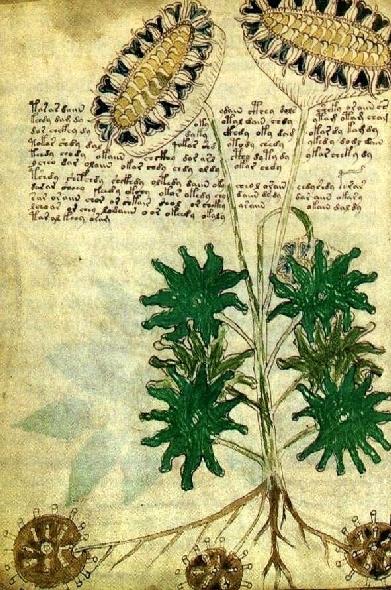The Voynich manuscript | Merveilles - Marvels | Scoop.it