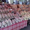 Garlic Growers List - Mmm Garlic | Gourmet Garlic | Scoop.it