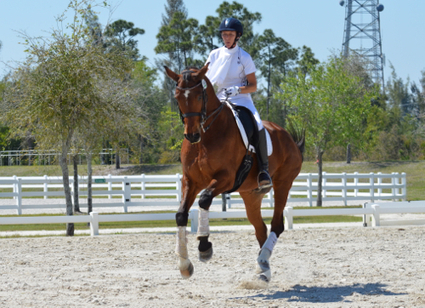 Reflections on Dressage and Dancing With Horses in Florida | Horses