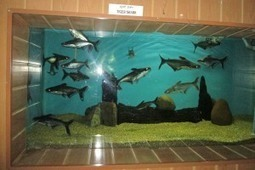 Bangalore Aquarium | Bangalore Tourist Places | Scoop.it