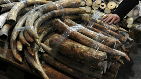 Hong Kong's seized ivory stockpile an elephant-sized headache | Kruger & African Wildlife | Scoop.it