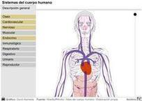 Sistemas del cuerpo humano - Didactalia: material educativo | Tasques escolars | Scoop.it