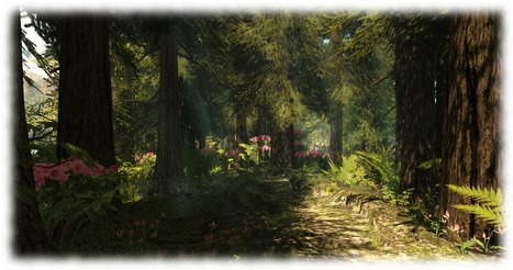Calas Galadhon re-opens in Second Life | Tech Link Library | Scoop.it