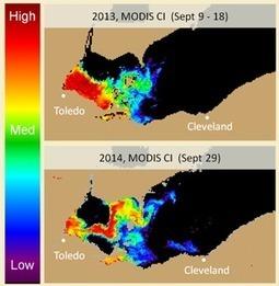NOAA, partners predict severe harmful algal bloom for Lake Erie. | marine biotechnology | Scoop.it