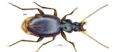 Un scarabée révèle que le Rif et la Catalogne étaient collés il y a 30 millions d'années | EntomoNews | Scoop.it