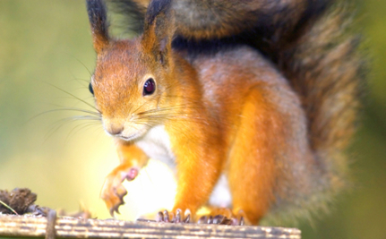 Peanut Butter & Love: Squirrel Returns to Trees Thanks to Good Samaritan | This Gives Me Hope | Scoop.it
